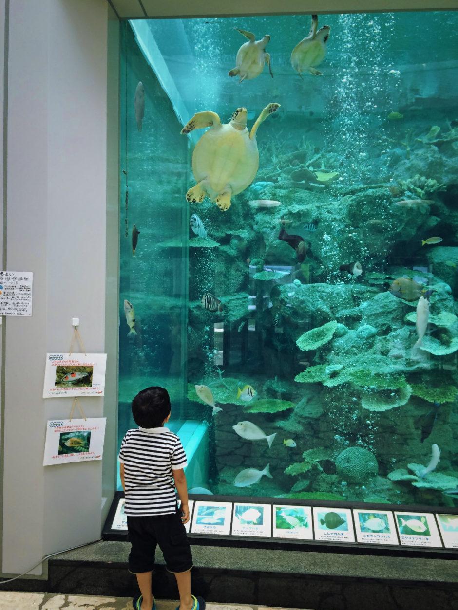 奄美海洋展示館 写真