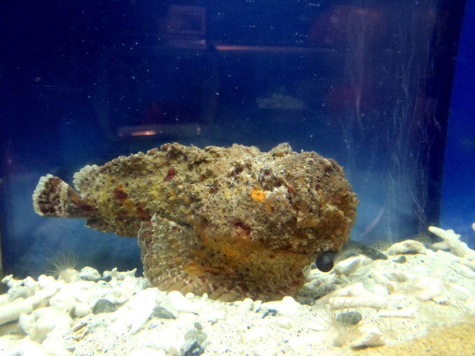海の生き物を観察しよう!楽しい海レジャーのための3つのルールと危険生物 写真